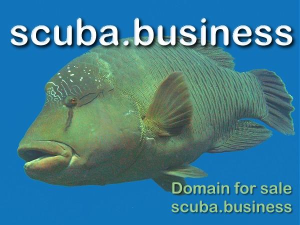 scuba business